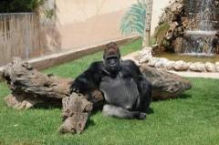 Zoosafari: si trasferisce a Ravenna