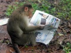 Scimmie: hanno imparato a leggere, video