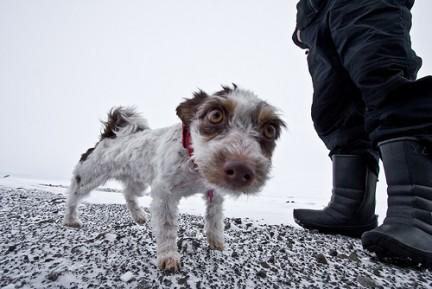 Fa respirazione bocca a bocca a un cucciolo dopo averne salvati 6 da fiume in piena