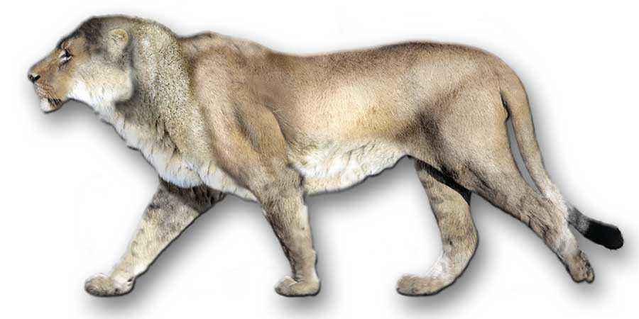 Trovato cucciolo di leone di 40mila anni fa: è del Plesitocene