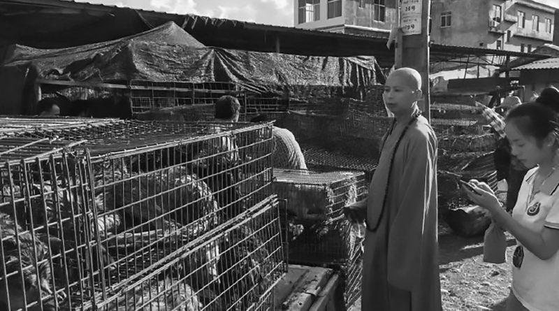 Festival della carne di cane: monaci ne salvano qualcuno prima che venga cucinato