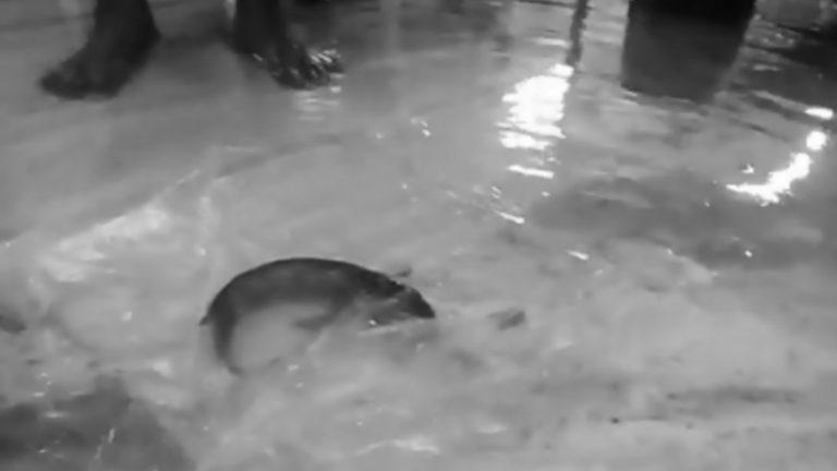 Allagamento in terapia intensiva: spuntano anche i pesci in corsia tra i letti